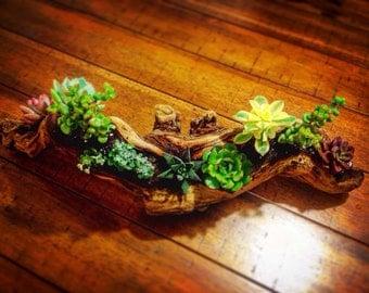 Small Driftwood Succulent Arrangement
