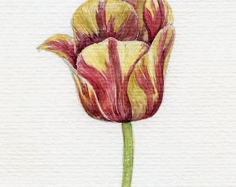 Original watercolor postcard with red and yellow tulip