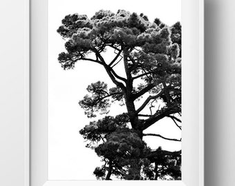 Woodland Photograph, Trees, Contemporary Photo. Printable art, Digital Download, black and white, nature, tree photo, home decor
