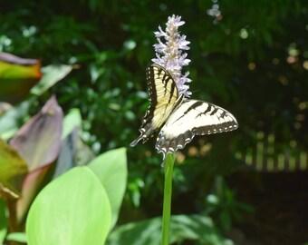 Butterfly- Digital Image, Butterfly Wing, Yellow Butterfly, Flower