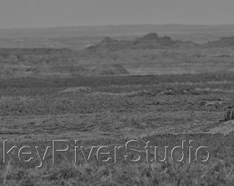 Prairie dogs in the Badlands print. Canvas photo print. Canvas Photography. Wall Art. 8x10, 11x14, 16x20, 20x24.