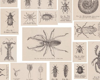 Victorian Insects - Bugs, Butterflies, Spiders, Flies, Moths, Beetles - 4 Printable A4 PDF - Vintage Decoupage Paper, Collage, Cardmaking