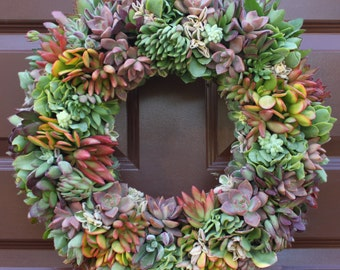 "16"" Multicolor Living Succulent Wreath, Succulent Arrangement, Living Wreath"
