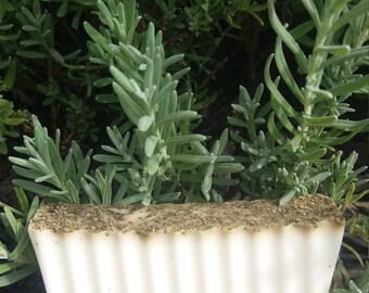 Goat Milk Lavender by Granny Hootenanny's Soap & Incense
