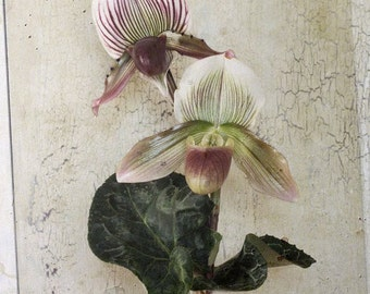 Orchids, fertilization symbol, floral Work, Purity Plant Nursery, pastel colors, botanical photo floral Sticker, Vintage