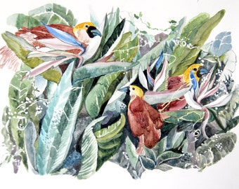 Birds of Paradise and plant - Archival Print
