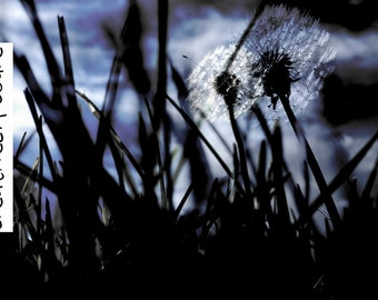 Imaginative Dandelions