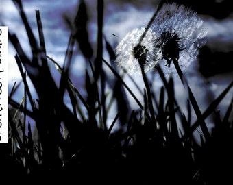 Imaginative Dandelions