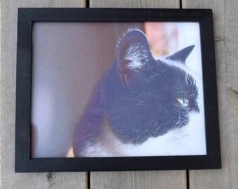 Cat Print - Kitty Contemplation