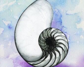 Nautilus Pen & watercolour Print