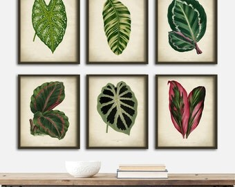 Botanical print SET of 6 art prints, instant collection botanical wall decor, plant leaves home decor, nature art, plant home decor,