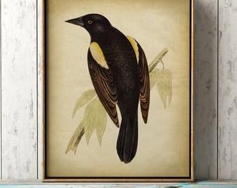 Lovely black bird print, bird poster, ornithology, songbird, bird illustration, bird wall decor, bird art