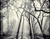 Sunburst Photography, Black and White Photo,  Morning Light, Trees, Nature, Ethereal Decor, Misty, Dreamy Photo