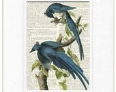 blue jay, magpie jay dictionary page print