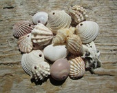 Small Natural SHELL CHARMS Top Drilled Sea Shell Mix