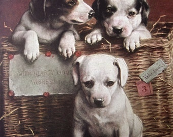 Antique dog postcard, Antique puppy dog postcard, Vintage dog postcard, terrier dog postcard, puppy dogs, dogs in a basket postcard