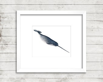 Diving Narwhale Watercolour Print from my original painting, Whale art,  Narwhale print, Narwhale painting, Whale Unicorn, Watercolour Whale