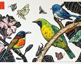 Hand Colored Birds and Moths - Handmade Letterpress Print