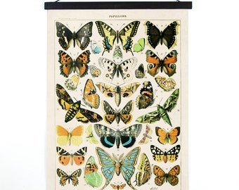 Pull Down Chart - Butterfly French Papillons Vintage Handmade Reproduction Canvas Print. Le Petit Larousse insects moth butterflies -CP261CV