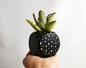 Succulent Cactus Planter (Plant Not Included) // Black + Gold Dot