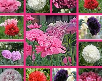 Pretty Peony Poppy Mix Flower Seeds