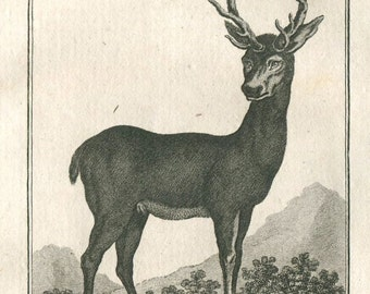 1800s Antique Print Le Cerf, Deer,  Buffon, Sonnini,