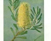 Antique Print, Botanical 2, 1940 nature floral flowers plants wall art vintage color lithograph illustration print