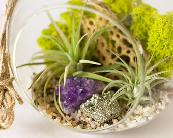 Hanging Terrarium Kit with Air Plants, Amethyst Cluster and Pyrite || Large Round