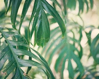 Botanical Print, Botanical Photography, Rainforest Photography, Jungalow, Jungle,  Tropical Home Decor, travel art, nature wall art, green