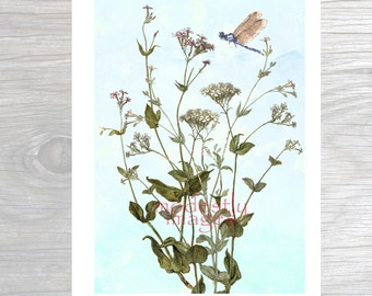 Giclee Print, Art Print ,'The Invincible Summer' , A4 print, Nature Print,  Limited Edition Art Print, Illustration, Flower Illustration