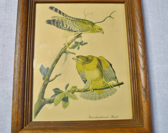 Vintage Red Shouldered Hawk Print Wooden Frame with Glass Birds Country Decor PanchosPorch
