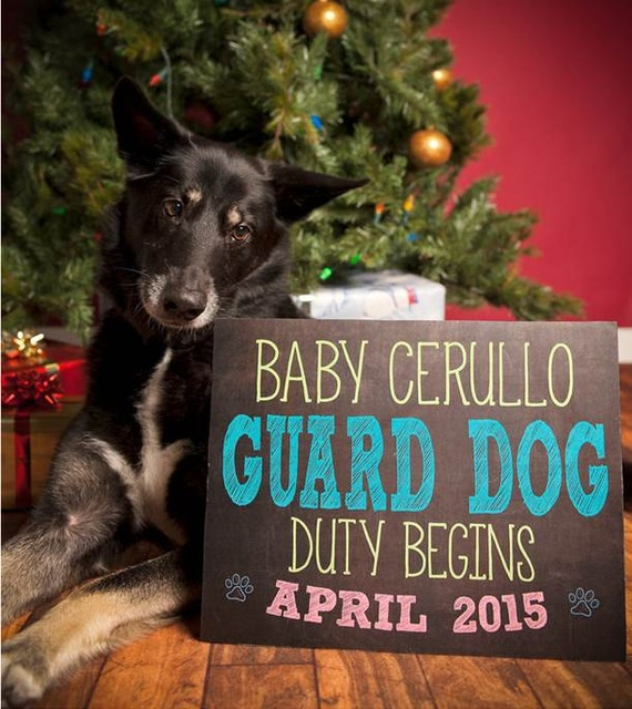 Chalkboard Pregnancy Announcement Photo Prop for Dog | Guard Dog Duty Begins | Size: 11x14 | *Digital File* | by MMasonDesigns