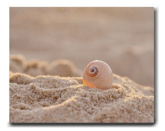 Beach seashell canvas photography, large coastal wall art canvas, neutral tan beige seashore canvas wall decor, nautical canvas gallery wrap