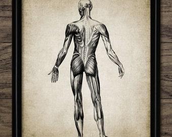 Human Muscle Anatomy Print - Human Anatomy - Vintage Human Muscle Illustration - Printable Art - Single Print #360 - INSTANT DOWNLOAD