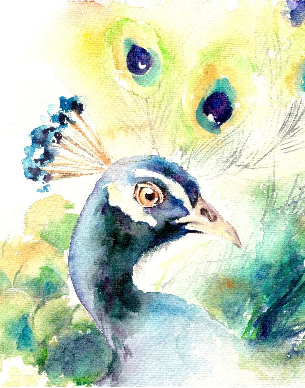 Peacock art print watercolor painting of bird peacock
