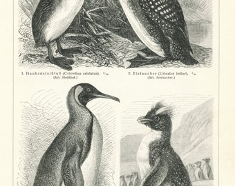 Antique Prints of Penguins - Terns - Swimming Birds - Set of Two Vintage Prints from 1895  - Home Decor - Gift for Him - Gift for Her
