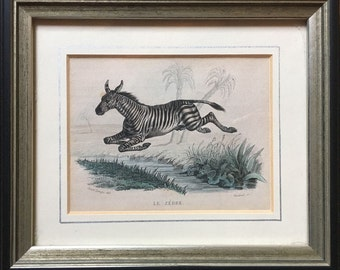 1837 FRAMED ZEBRA ENGRAVING rare original antique print african safari animal hand colored engraving - also available framed & ready to hang