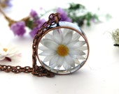 Terrarium necklace. Daisy necklace. Australian paper daisy .White flower necklace in copper. Botanical resin Jewelry. Real flower jewelry