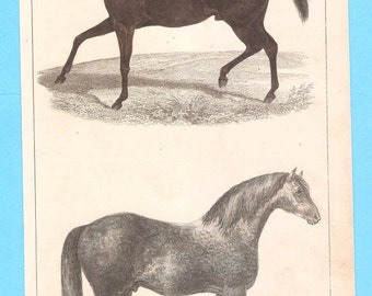 Antique animal (horses) illustration