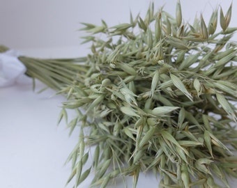 Dried oats, dried oat bouquet, oat bunch, oat head, green grains, green oats,dried grains, wedding decor, natural oats