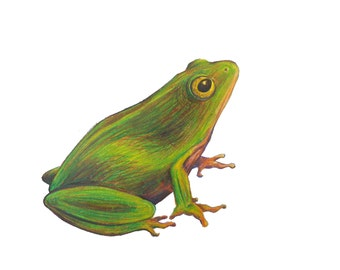 Frog Giclee Print - 5x7, 8x10, or 10x14 Giclee Print of Colored Pencil Drawing