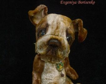 English Bulldog, Jim