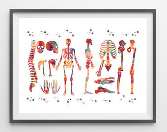 Human Body skeletal system watercolor print anatomy art medical art poster human skeleton structure print skeleton and bones illustration