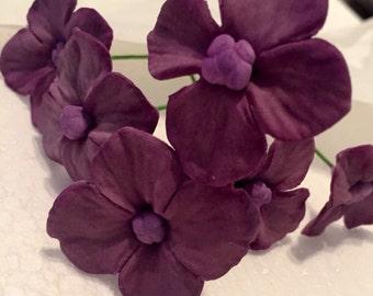 Sugar flower hydrangea