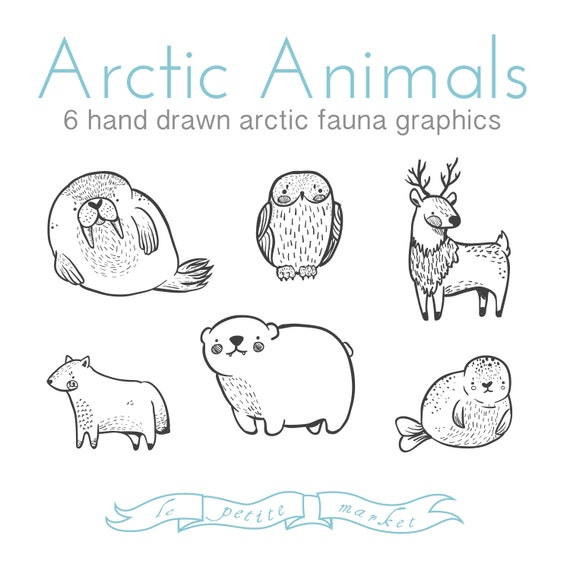 Cute Doodly Hand Drawn Arctic Animal Clipart By Lepetitemarket