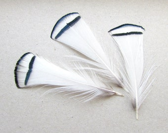 8 White Lady Amherst Pheasant Feathers. Natural White Feathers with Black Rim. Craft feathers. UK Seller
