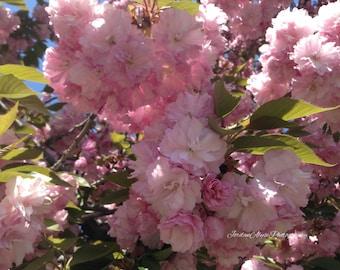 Cherry Blossom Print 2