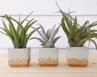 Nice Set Of 3 Mini Air Plant Holders | Concrete Gold Planters | Cube Air Plant  Holders