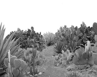 Cactus Print, Cacti Art, Cactus Photo, Minimal Photo, Desert Wall Art, Cacti Decor, Minimalist Art, Desert Photography, Cactus Garden