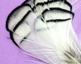 3.5 Inch Lady Amherst Pheasant Feathers (10) Black and White Pheasant Feathers for Crafts. White Fascinator Feathers. Lady Amhurst Feathers.